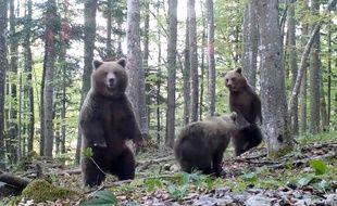 Une famille d'ours en Slovénie.