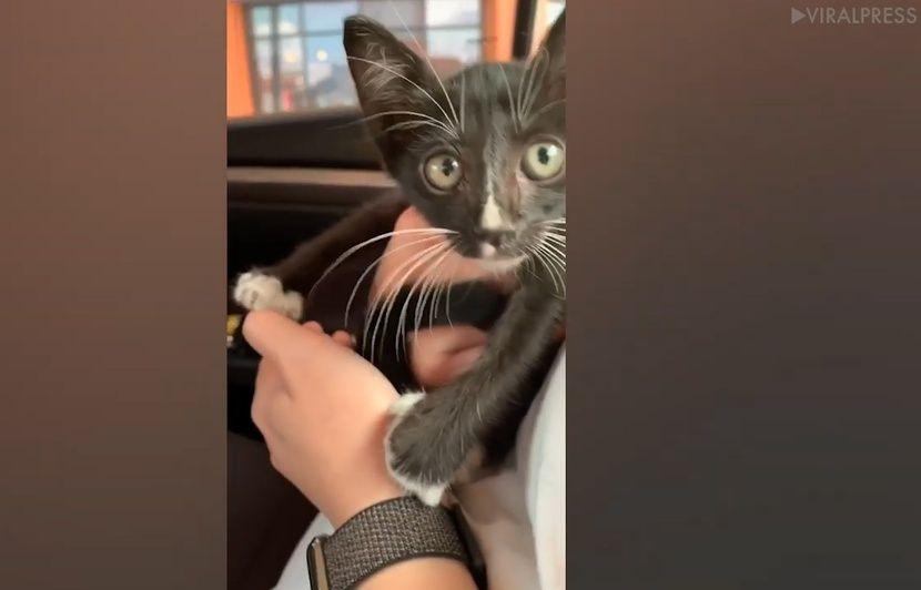 VIDEO. Thaïlande: Un chaton sauvé de justesse des roues d'une voiture sur l'autoroute