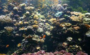 Des coraux. Illustration.