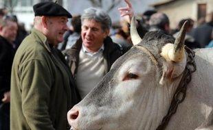 Des éleveurs discutent à côté d'un boeuf de Bazas à l'occasion de la fête des Boeufs gras de Bazas le 12 février 2015