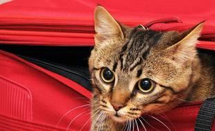 Pour emmener son animal dans l'avion, cela dépend de son poids