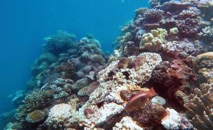 La Grande barrière de corail, au large de l'Australie.