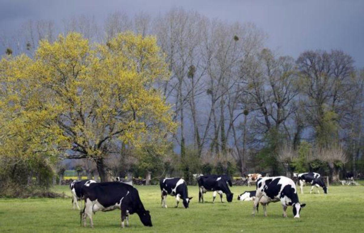 Si la plupart des éleveurs sont encore réticents à utiliser le lin dans l'alimentation animale, notamment en raison d'un surcoût potentiel, les adeptes de ces méthodes alternatives sont convaincus de leur bienfait sur le cheptel et l'environnement. – Joël Saget afp.com