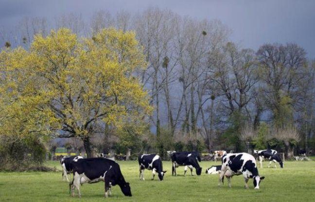 Si la plupart des éleveurs sont encore réticents à utiliser le lin dans l'alimentation animale, notamment en raison d'un surcoût potentiel, les adeptes de ces méthodes alternatives sont convaincus de leur bienfait sur le cheptel et l'environnement.