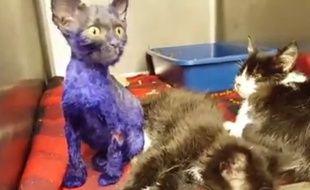Capture d'écran d'une vidéo de la fondation Nine Lives, montrant Smurf, un chaton maltraité.