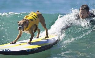 Compétition de surf pour chiens à Huntington Beach, en 2015.