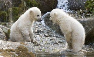 Deux ours blancs au zoo de Munich le 7 avril 2014