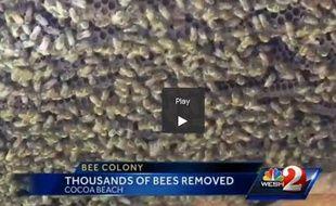 Extrait de la vidéo de Wesh TV montrant une ruche de 20.000 abeilles délogées d'une maison en Floride.