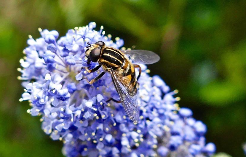 Pollens: 26 départements placés en alerte rouge en raison du risque d'allergie «très élevé»