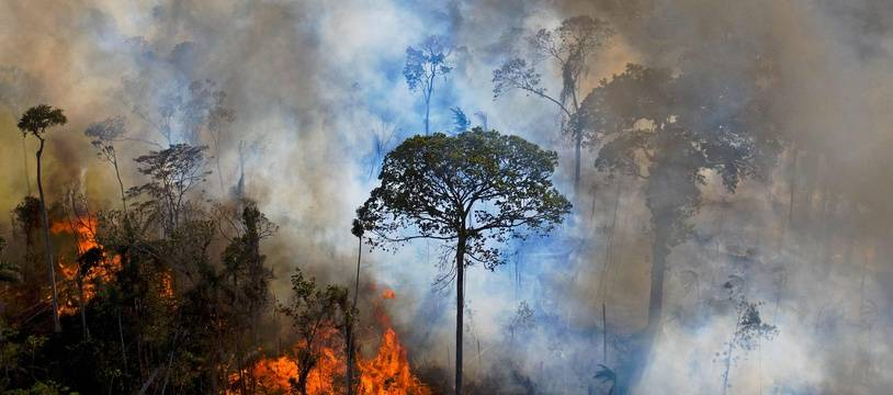 Le 15 août 2020, des feux illégaux sont allumés dans la forêt amazonienne.