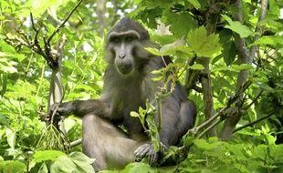 Au centre de primatologie de Niederhausbergen