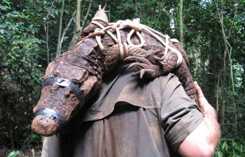 VIDEO. Gabon: Des crocodiles orange vivent coincés dans des grottes depuis 3.000 ans