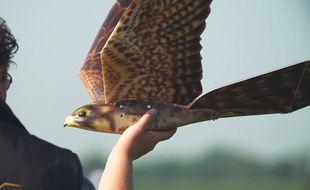 Le drone de Pilgrim Technology ressemble à un vrai faucon.