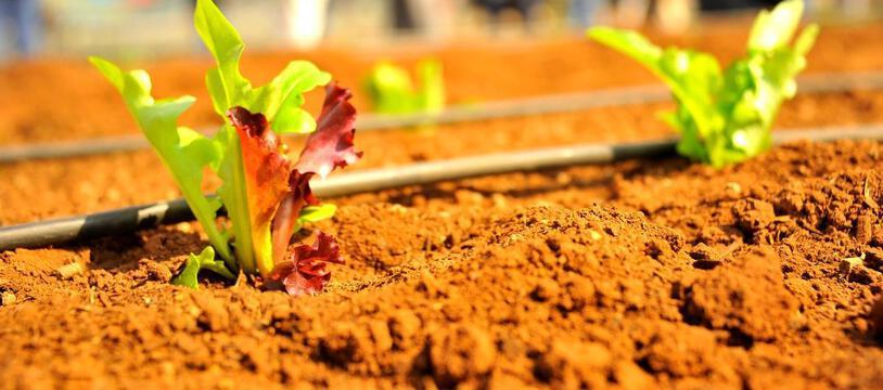 Si l'agriculture urbaine peut apporter des réponses, celles-ci restent toutefois partielles face à la demande globale
