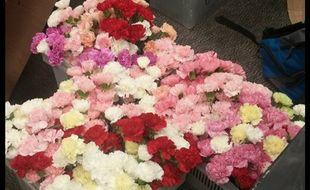 Un adolescent américain a acheté 900 fleurs pour en offrir une à chaque fille de son lycée pour la Saint-Valentin.