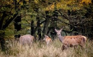 Les animaux ont réoccupé certains espaces en forêt et ailleurs, en l'absence de présence humaine pendant le confinement.
