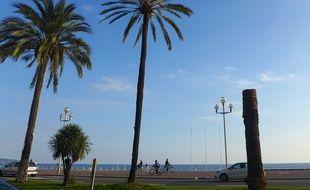 Un palmier sur la promenade des Anglais.