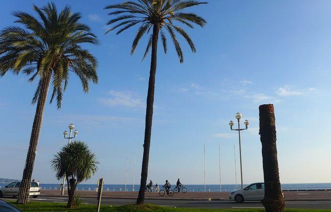 Un palmier touché, mardi, sur la promenade des Anglais