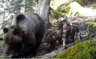 Les trois oursons de Sorita ont été filmés dans la montagne béarnaise.