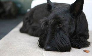 Barney, le chien de George W. Bush, en finit avec une belle carrière politique.