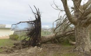 Un arbre déraciné au lycée catholique français De Montmartre au Vanuatu le 19 mars 2015