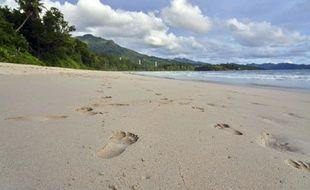 Environ 400 pies vivent sur quatre îles des Seychelles (illustration).