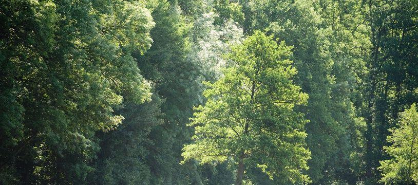 Illustration de la forêt de Montmorency, dans le Val d'Oise.