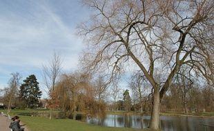 Illustration. Arbres près du bassin au parc de l'Orangerie.