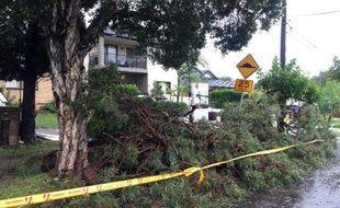 Des arbres sont tombés à Sydney, le 21 avril 2015 à la suite d'intempéries