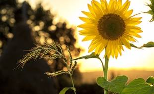 Le soleil est au rendez-vous pour ce début de l'été.