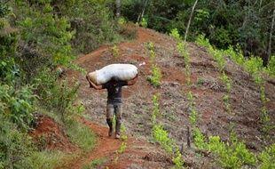 """La guérilla des Farc, qui mène des pourparlers de paix avec le gouvernement colombien à Cuba, a proposé mardi de """"réguler"""" la production et la vente des produits des cultures illicites telles que la coca, le pavot ou le cannabis."""