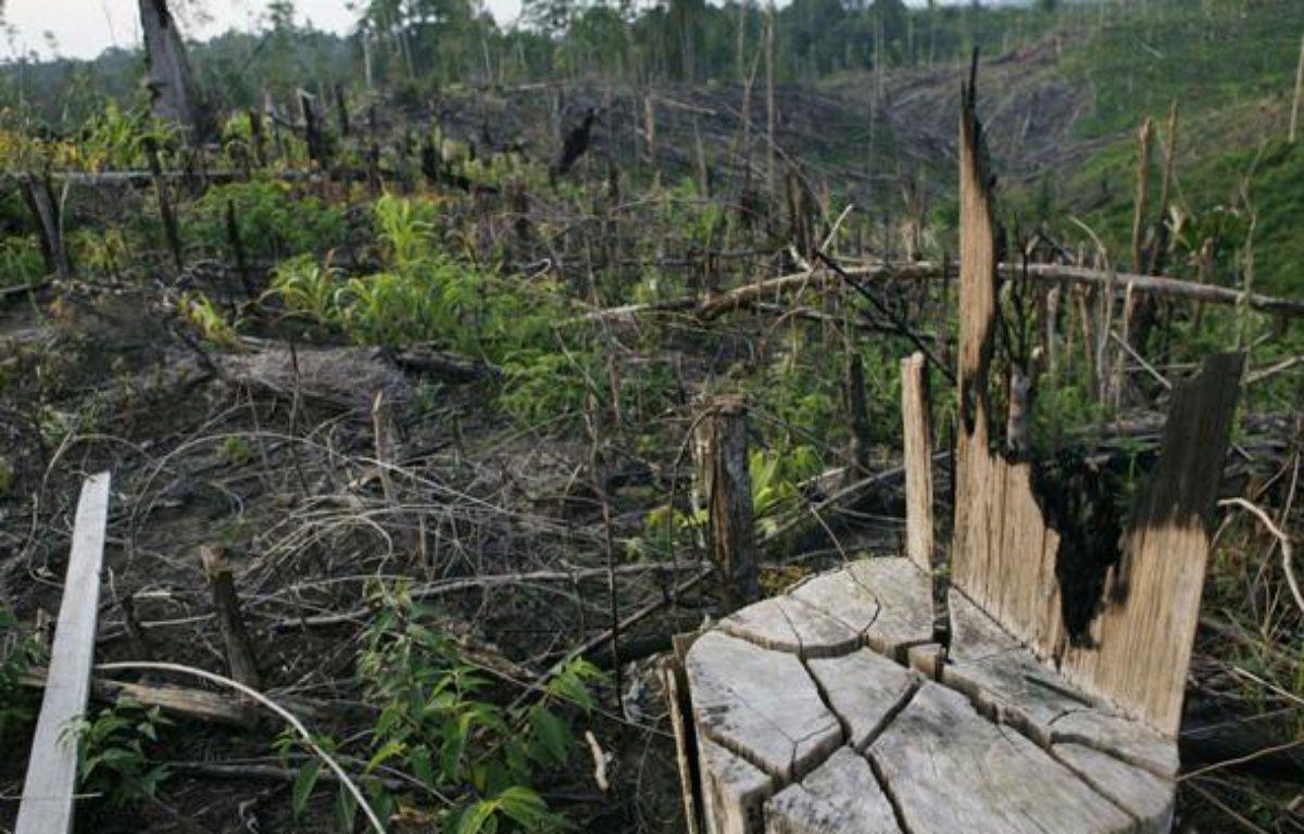La forêt indonésienne brûlée pour laisser la place aux palmiers à huile. – ACHMAD IBRAHIM/AP/SIPA