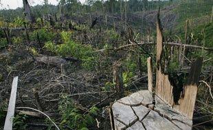 La forêt indonésienne brûlée pour laisser la place aux palmiers à huile.