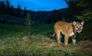 Expérience unique avec femme cougar de Sailly-lez-Cambrai