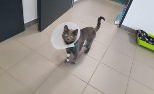 Tara, un chat de 3 ans a bénéficié d'une transplantation rénale réalisée par des chirurgiens urologues à Lyon. Une première...