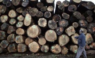 Des troncs d'arbres destinés au bois de chauffe sont empilés au Pin-la-Garenne (Orne), le 21 décembre 2012