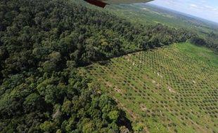 Paysage lunaire au milieu de l'immensité verte, une bande entièrement pelée traverse la jungle, piquée de milliers de jeunes pousses à l'avenir en or: rouge celui-là, comme le fruit du palmier à huile. En Indonésie, l'équivalent de six terrains de football de forêt primaire disparaît chaque minute.