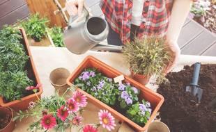 Pour vous aider à choisir, voici un comparatif des meilleures jardinières