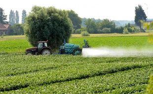 La potentialité de développer un cancer de la prostate serait plus élevée chez les cultivateurs de tournesol ou de pommes de terre.