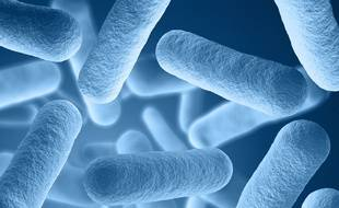 Illustration de bactéries qui composent le microbiote.