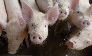 Les professionnels de la filière porcine du monde entier dénoncent l'appellation qui a été faite de la «grippe porcine».