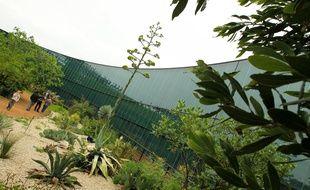 Illustration. Au Muséum, dans le jardin botanique Agave weberi est sur le point de fleurir. 1er/06/2012 Toulouse