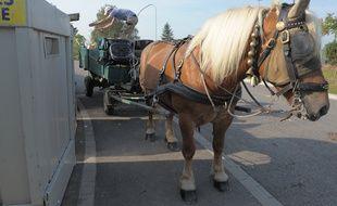 Hé oui, le ramassage des déchets ménagers à Strasbourg par des chevaux était un poisson d'avril. Mais Quadrille est bien employée par la commune de Lampertheim. (Archives)