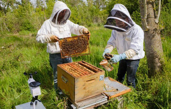 L'installation d'une ruche connectée pour le projet Econect.