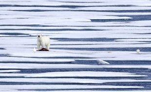 Illustration d'un ours polaire.
