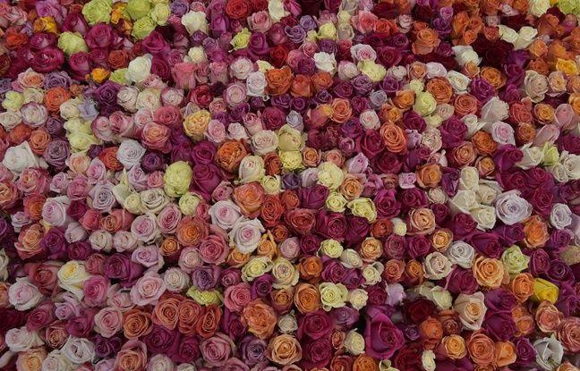 L'Equateur espère entrer dans le livre Guiness de record pour sa pyramide de roses.
