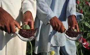 """L'ampleur de la production d'opium en Afghanistan, qui nourrit la corruption aussi bien que l'insurrection talibane, fait courir le risque de l'apparition d'un """"Etat narco-criminel"""" dans les années à venir, a dénoncé mercredi un haut responsable américain dans un rapport."""