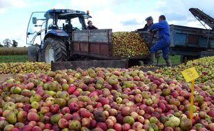 Illustration de la récolte de pommes à cidre chez un producteur de Bédée en Ille-et-Vilaine.