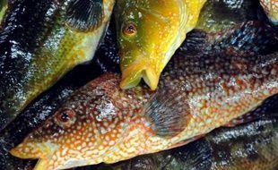 """Selon un rapport de la Commission, en mer Méditerranée, 80% des stocks de poisson sont victimes de la surpêche. La situation s'améliore toutefois """"lentement"""" dans les eaux européennes de l'Atlantique, où la proportion des stocks surpêchés est passée de 94% en 2005 à 63% en 2011, et 47% en 2012."""