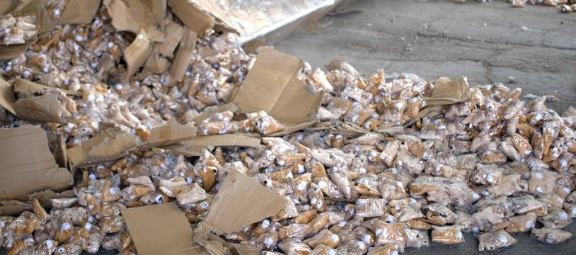 Destruction de peluches dangereuses en provenance de Chine, le 23 septembre 2020 au Havre par les services des douanes française.